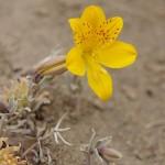 Autre fleur inconnue